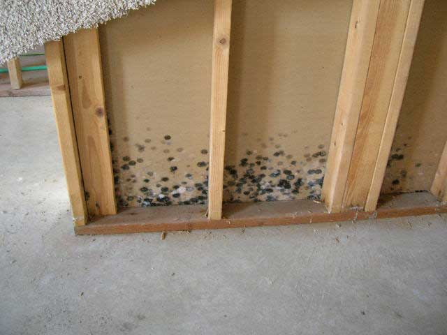 Mold on studs and on drywall