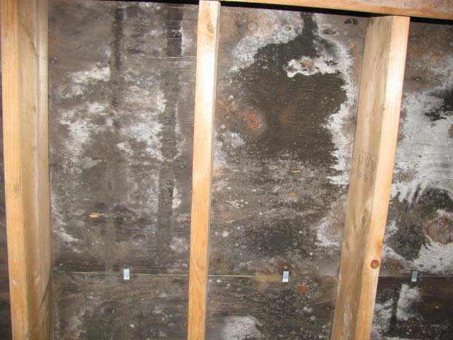 Mold discovered behind drywall