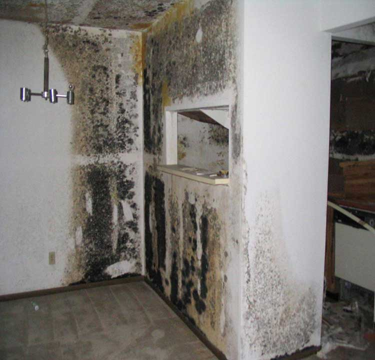 Mold has overtaken these living quarters, from floor to ceiling