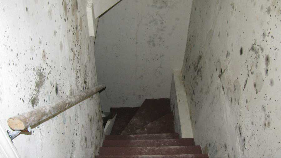 Before even entering the basement, mold colonies appear
