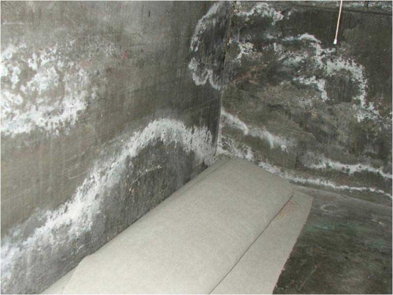 Efflorescence and mold spreading on cement
